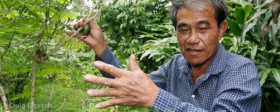 Agroforester in southeastern Thailand.
