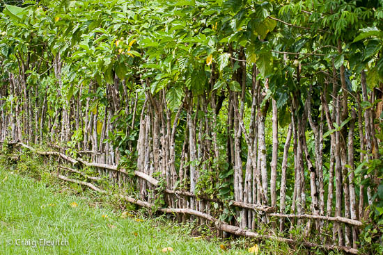 palisade (a fence of closely set stakes)