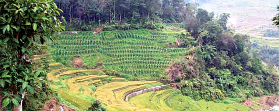 Ifugao Rice Terraces (photo: FAO)