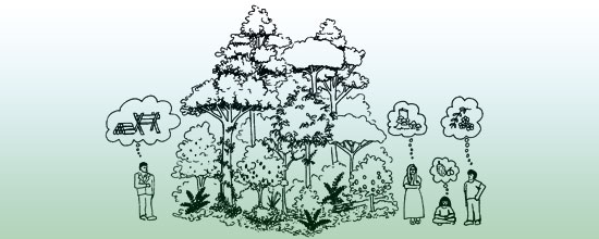 Schematic drawing of forest garden